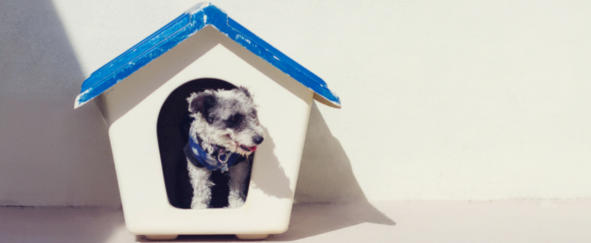 A puppy looks out of his dog house modeled after a suburban-type home